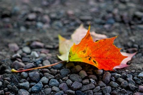 60 Breathtaking Fall Images For Your Inspiration